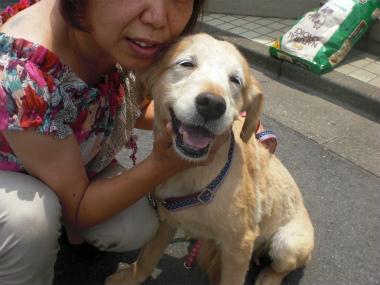 f:id:dog_life_saving:20130714114707j:image