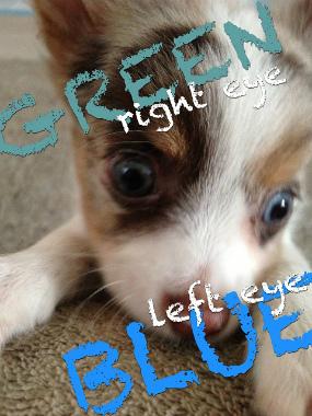 f:id:dog_life_saving:20130718211151j:image