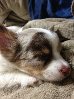 f:id:dog_life_saving:20130718211152j:image