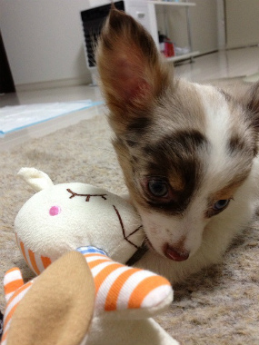 f:id:dog_life_saving:20130718211153j:image