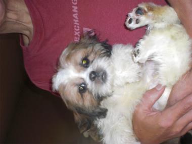 f:id:dog_life_saving:20130728210126j:image