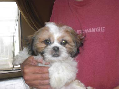 f:id:dog_life_saving:20130728210128j:image