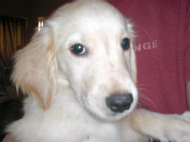 f:id:dog_life_saving:20130804075822j:image