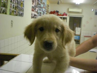 f:id:dog_life_saving:20130804075824j:image