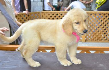 f:id:dog_life_saving:20130804083144j:image