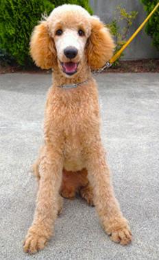 f:id:dog_life_saving:20130804091102j:image