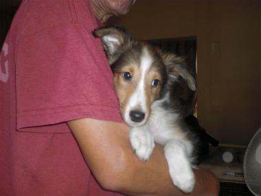 f:id:dog_life_saving:20130804093443j:image