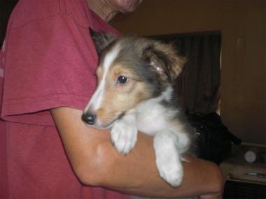 f:id:dog_life_saving:20130804093444j:image