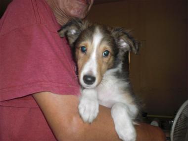 f:id:dog_life_saving:20130804093445j:image