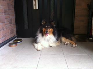 f:id:dog_life_saving:20130804220923j:image