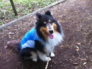 f:id:dog_life_saving:20130804220924j:image