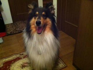 f:id:dog_life_saving:20130804220925j:image