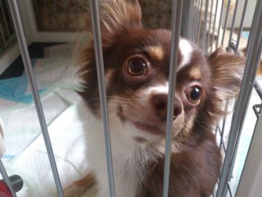 f:id:dog_life_saving:20130823201646j:image