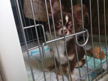 f:id:dog_life_saving:20130823201647j:image