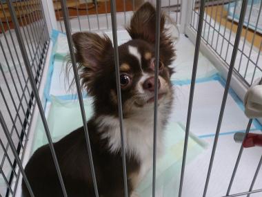 f:id:dog_life_saving:20130823201648j:image
