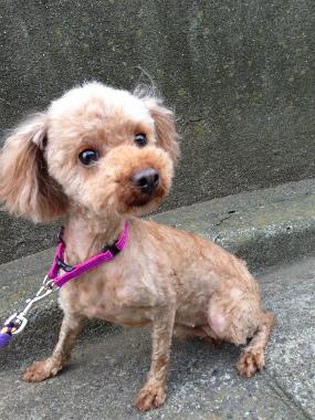 f:id:dog_life_saving:20130823202633j:image