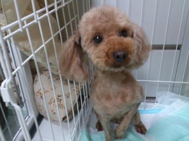 f:id:dog_life_saving:20130823202634j:image