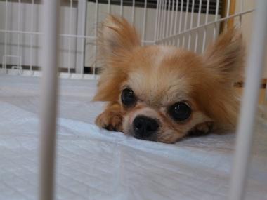f:id:dog_life_saving:20130823204158j:image