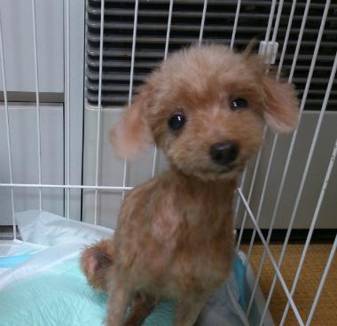 f:id:dog_life_saving:20130823210748j:image