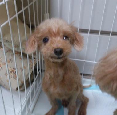 f:id:dog_life_saving:20130823210749j:image