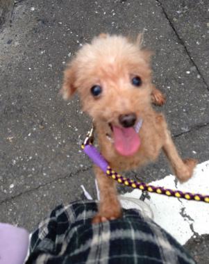 f:id:dog_life_saving:20130823210750j:image