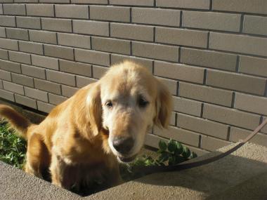 f:id:dog_life_saving:20130823224705j:image