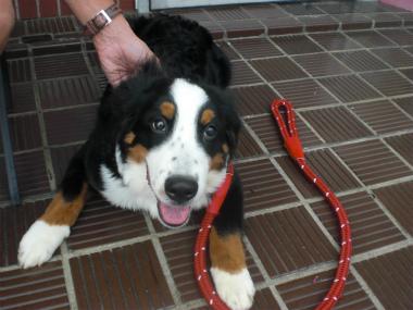 f:id:dog_life_saving:20130827200024j:image