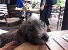 f:id:dog_life_saving:20130831173643j:image