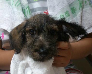 f:id:dog_life_saving:20130831173646j:image