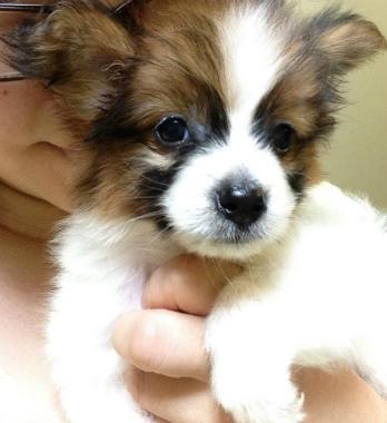 f:id:dog_life_saving:20130831174127j:image