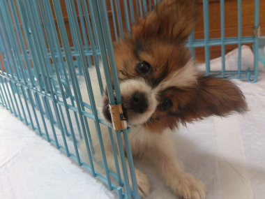 f:id:dog_life_saving:20130831174128j:image