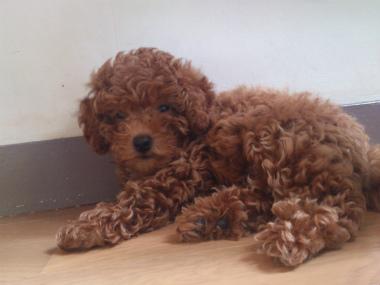 f:id:dog_life_saving:20130831174744j:image