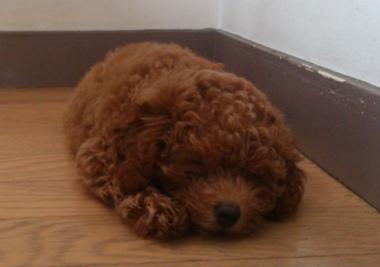 f:id:dog_life_saving:20130831174745j:image