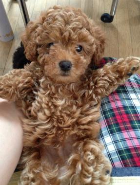 f:id:dog_life_saving:20130831174746j:image