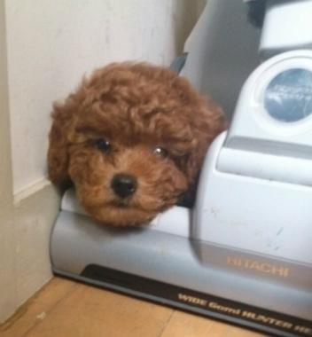 f:id:dog_life_saving:20130831174747j:image