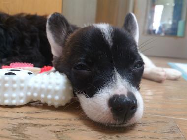 f:id:dog_life_saving:20130831175926j:image