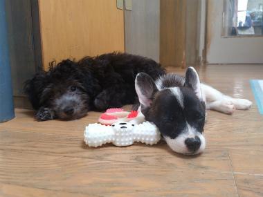 f:id:dog_life_saving:20130831175927j:image