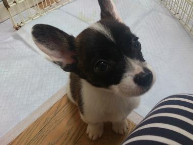 f:id:dog_life_saving:20130831175928j:image