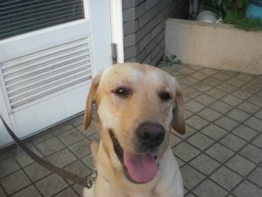 f:id:dog_life_saving:20130901200359j:image