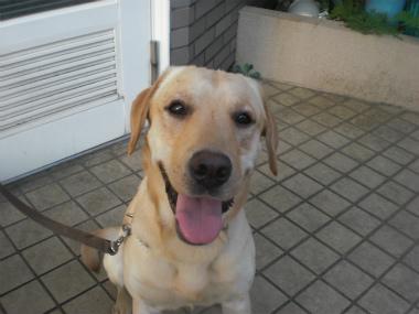 f:id:dog_life_saving:20130901200400j:image