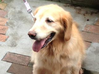 f:id:dog_life_saving:20130916215607j:image