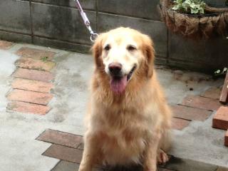 f:id:dog_life_saving:20130916215608j:image