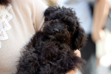 f:id:dog_life_saving:20131007202314j:image