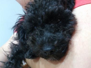 f:id:dog_life_saving:20131007202315j:image