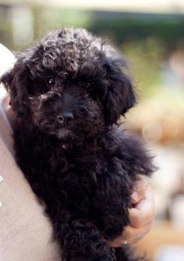 f:id:dog_life_saving:20131007202316j:image