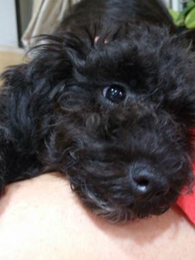 f:id:dog_life_saving:20131007202317j:image