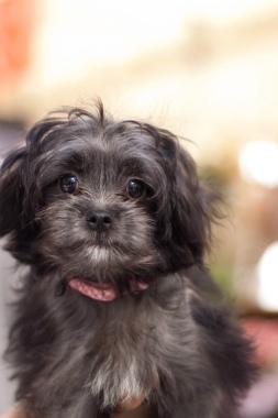 f:id:dog_life_saving:20131007203142j:image