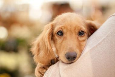 f:id:dog_life_saving:20131007204207j:image