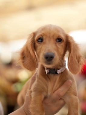 f:id:dog_life_saving:20131007204208j:image