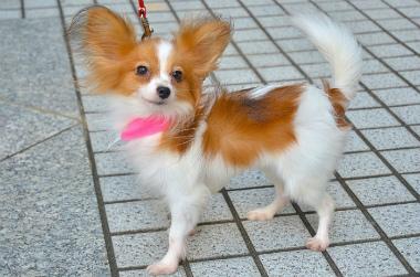 f:id:dog_life_saving:20131007205343j:image